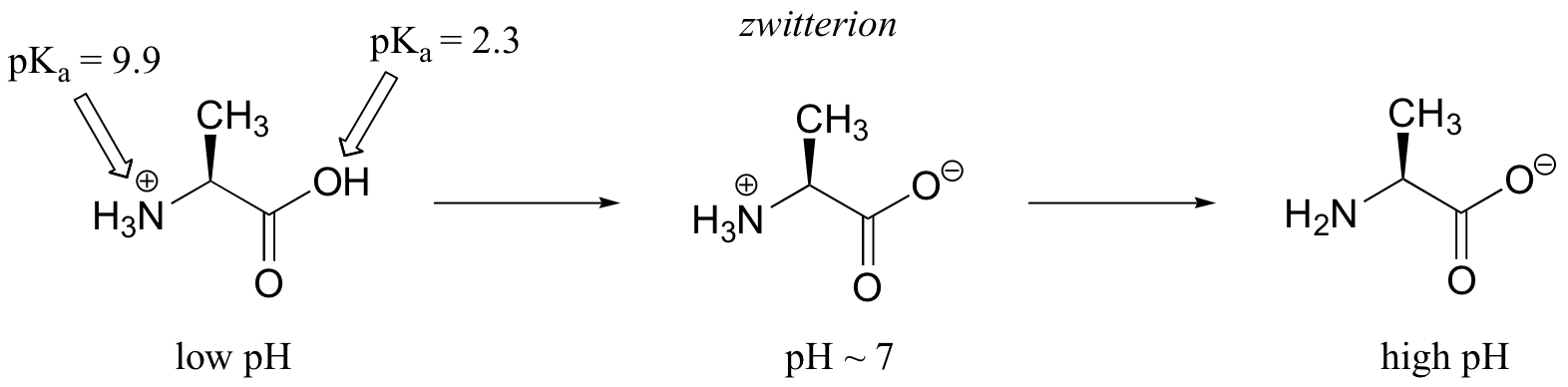 amminoacido