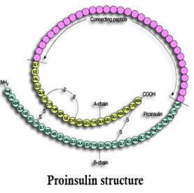 proinsulina