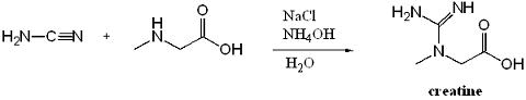 sintesi-creatina