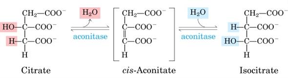 citrato isomerizzazione