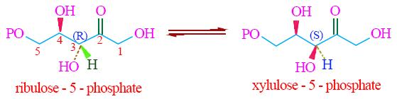 ribulosio isomerizzazione