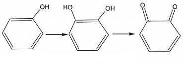 polifenolossidasi